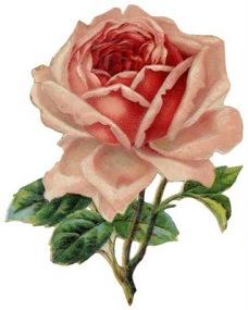 free-pink-vintage-rose-clip-art