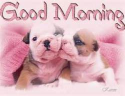dogmorning